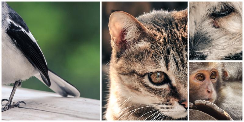Animal Peek