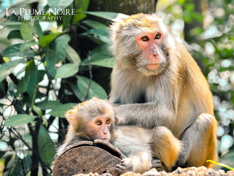 Monkeys (1 of 5)