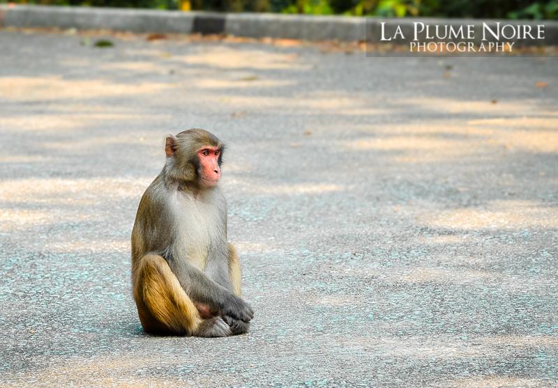 Monkeys (2 of 5)