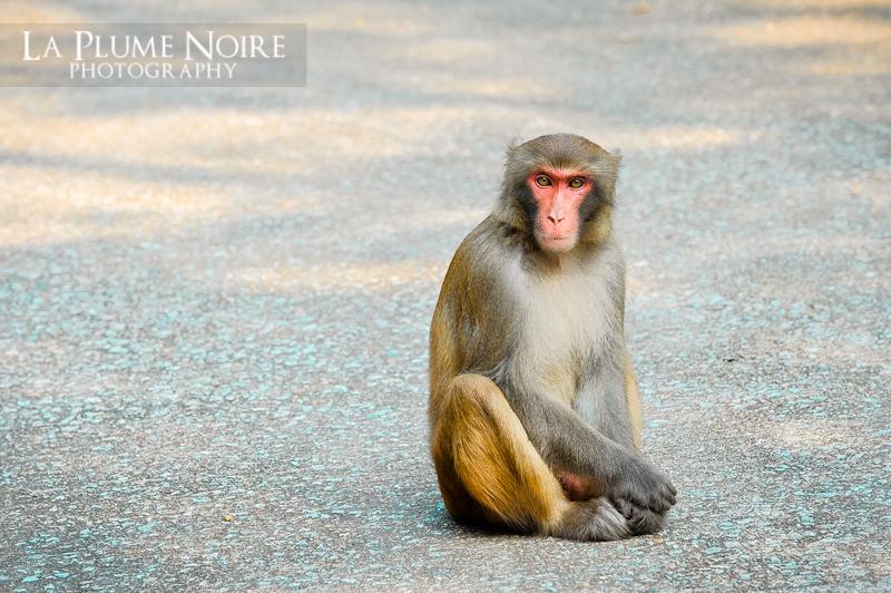 Monkeys (3 of 5)
