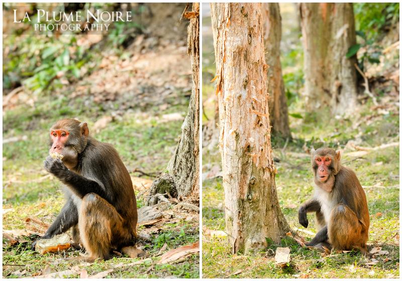 Monkeys (5 of 5)
