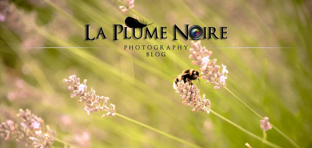 La Plume Noire Photography